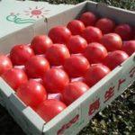 長生(ながいき)トマトは通販と購入方法で値段が。味の評判や口コミ